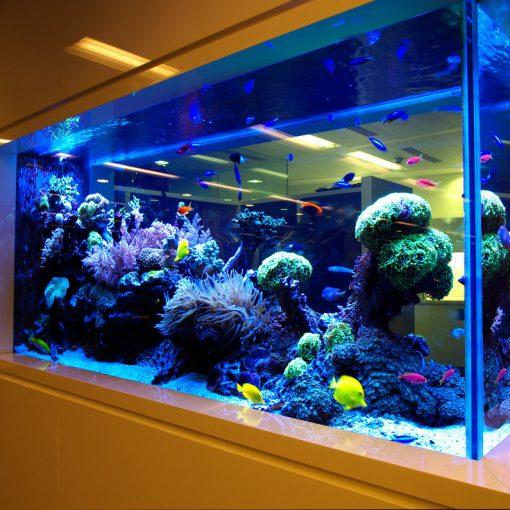 Jual Kaca Aquarium Berkualitas Tinggi